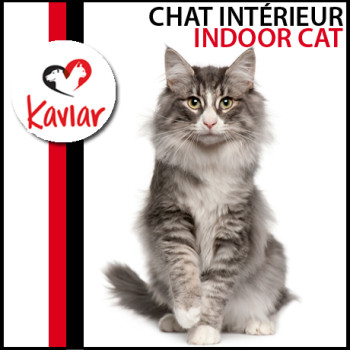 CHAT-INTERIEUR-INDOOR-CAT