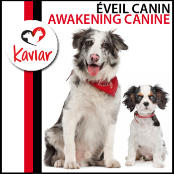 EVEIL-CANIN-AWAKENING-CANINE