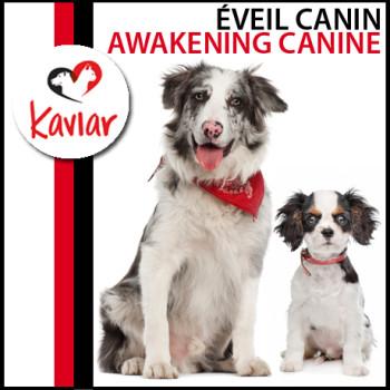 EVEIL-CANIN-AWAKENING-CANINE