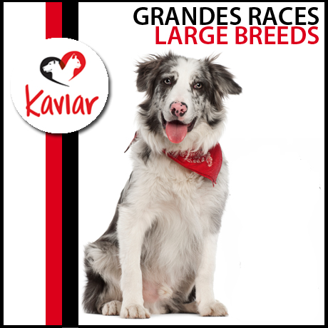 GRANDES-RACES-LARGE-BREEDS