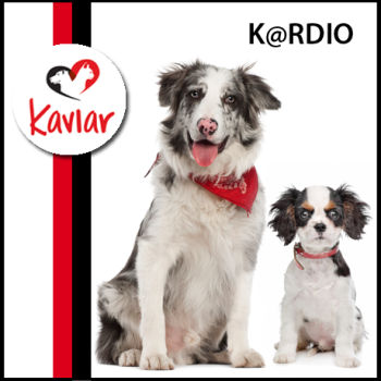 Kardio_kaviar_dog_food