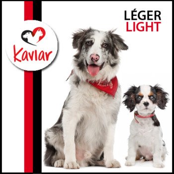 LEGER-LIGHT-DOG